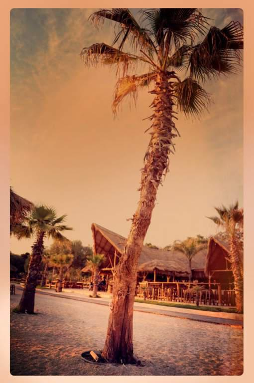 Bolivar Beach Bar gallery